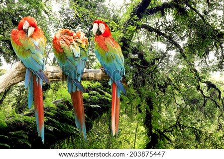 parrots macaw in the rainforest - stock photo