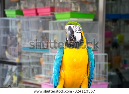 parrots ,Parrots Court ,Colorful parrot ,beautiful parrots,parrots looking,parrots sitting,animals - stock photo