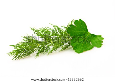 Parsley and dill isolated over white - stock photo