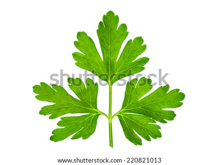 Parsley aromatic herb isolated on white - stock photo