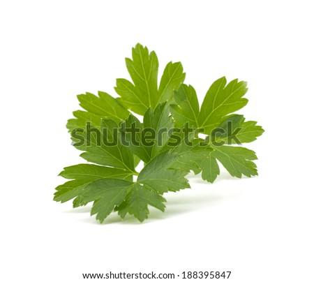 Parsley closeup isolated on white background - stock photo