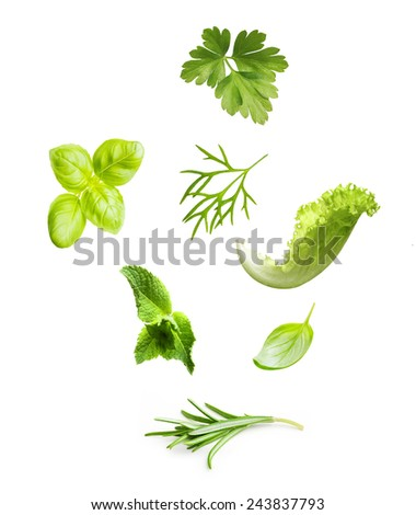 Parsley herb, basil leaves, dill, mint, lettuce and rosemary spice isolated on white background. - stock photo