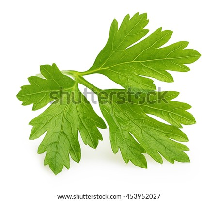 Parsley herb isolated - stock photo