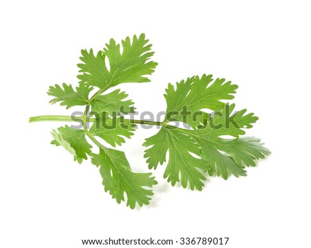 parsley isolated on white background. - stock photo