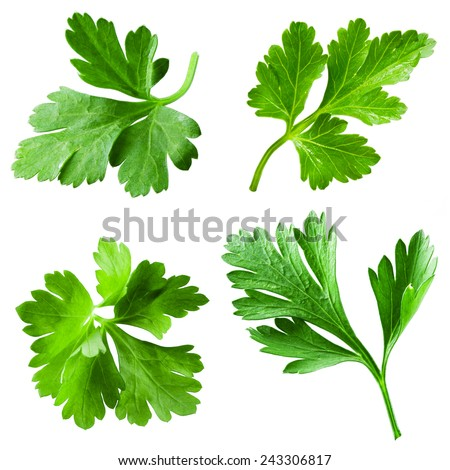 Parsley isolated on white background. Collection - stock photo