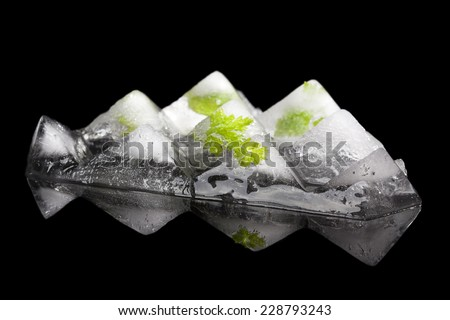 Parsley leaves frozen in ice cubes frozen in black background. Culinary fresh cooking herbs. - stock photo