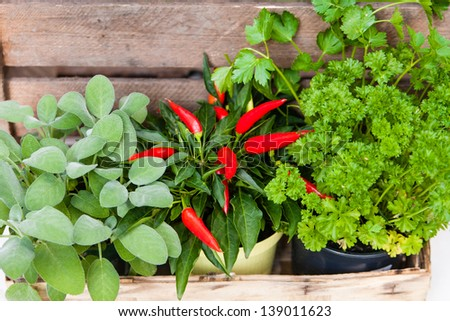 Parsley, salvia and mild pepper - stock photo