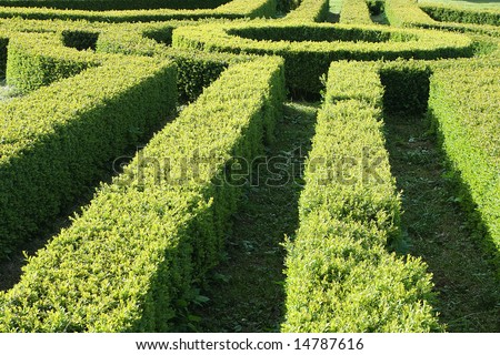 Part of a garden hedge maze - stock photo
