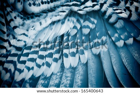 part of  bird's wing close up. - stock photo