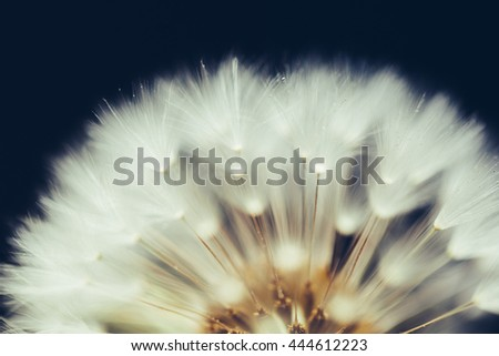 part of dandelion flower on dark background - stock photo