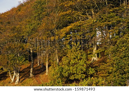 Part of Danish autumn forest - stock photo