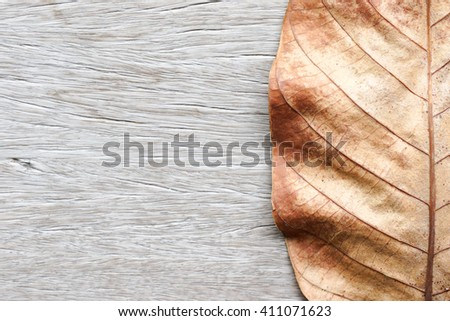 Part of dry leaf for background - stock photo