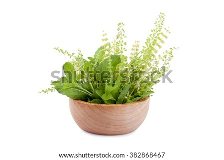 part of holy basil pile in bowl - stock photo