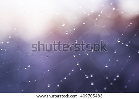 Part of spiderweb covered with dew drops in morning time - stock photo