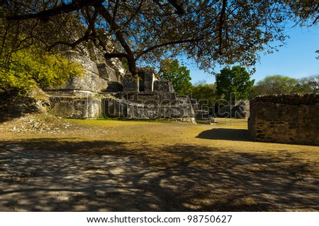 Partial view of Altun Ha Mayan Temple from below a large low tree - stock photo
