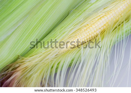 Parts of baby corn - stock photo
