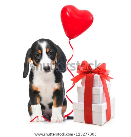 Party dog with gift boxes and balloons. Isolated on white background - stock photo