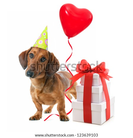 Party dog with party hat,  gift boxes and balloons. Isolated on white background - stock photo