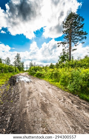 Passing through the forest road to the lake - stock photo