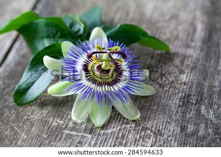 passion flower on wooden surface - stock photo