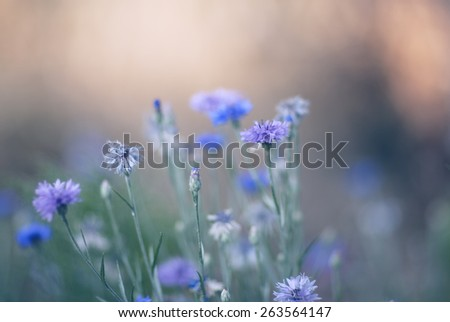 Pastel colored flowers. Soft focus, small depth of field photo - stock photo