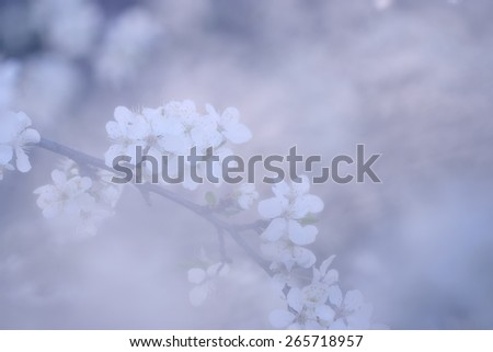 Pastel colored photo of tree flowers blossoms. Soft focus, small depth of field photo. - stock photo