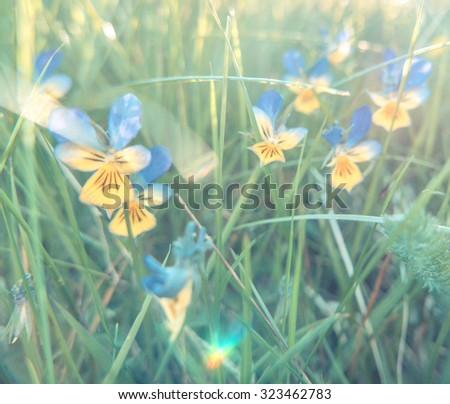 Pastel Filtered Soft Focus Image Of Summer Wild Flowers In Long Grass - stock photo