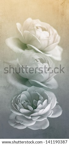 Pastel roses on grunge paper background - stock photo