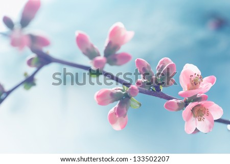 Pastel tones Spring blossom macro. Vintage feel. - stock photo