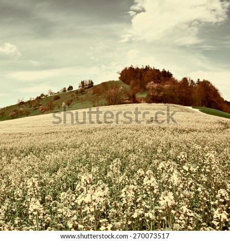 Pasture of Lucerne around Farm House in Switzerland, Vintage Style Toned Picture - stock photo