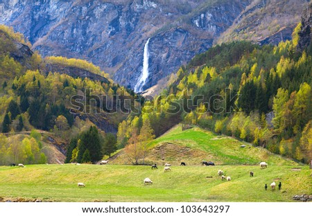 pasture with sheep and beautiful waterfall - stock photo