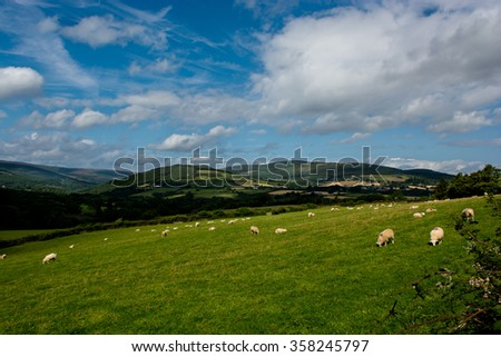 Pasture with Sheep in Ireland - stock photo