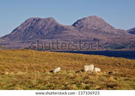 Pasturelands on western coast of Scotland near Loch Lurgainn - stock photo