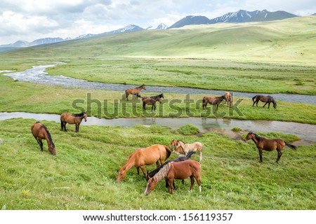 Pasturing horses and foals in mountains - stock photo