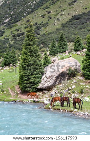 Pasturing horses at mountain river - stock photo