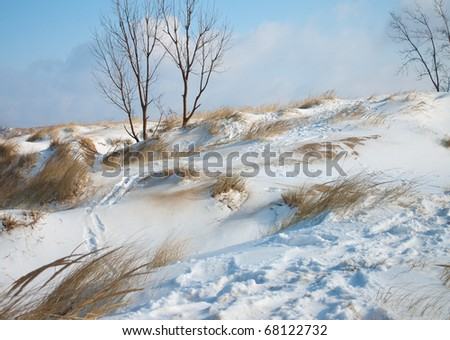 Patches of dune grass ride the waves of sand and snow on top of the ever changing Mount Baldy inside the Indiana Dunes National Lakeshore. - stock photo