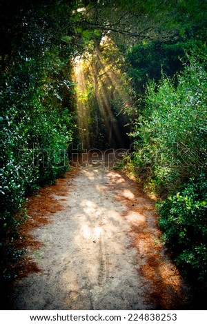 Path across a forest with magical lights coming from leafage - stock photo