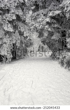 Path during snow storm in winter forest. - stock photo