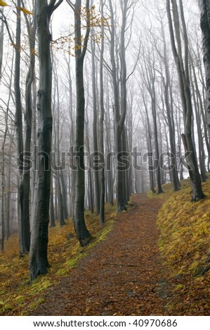 path in a beech forest. autumn - stock photo