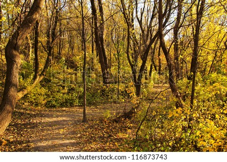 Path in a forest during autumn by a nice day - stock photo