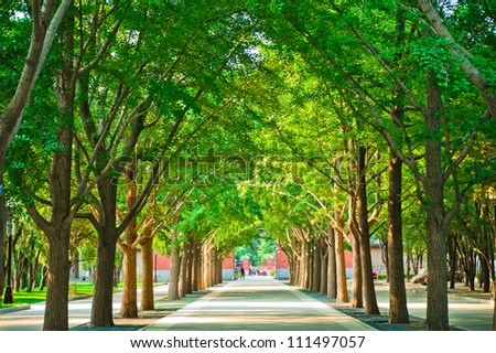 path in a park with trees on both sides - stock photo