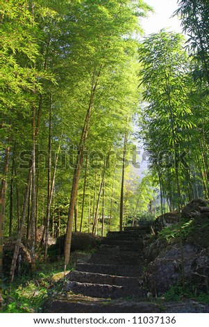 Path in a tropical bamboo forest - stock photo