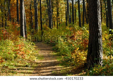 Path in autumn forest during sunny weather - stock photo