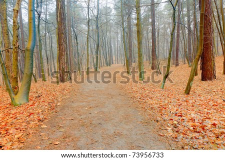 Path in autumn forest with mist. Ground covered with orange leafs. - stock photo
