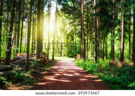 Path in beautiful green forest. Log stacks along the road. Springtime landscape. Nature reserve in Germany - stock photo