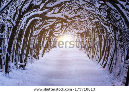 Path in dark forest at winter time - stock photo