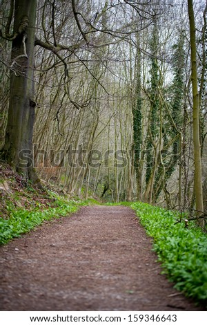Path in early spring forest, England - stock photo