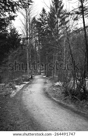 Path in forest in Austria in Black and White - stock photo