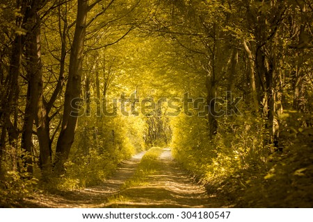 path in golden forest - stock photo