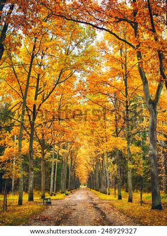 path in park alley at autumn day - stock photo